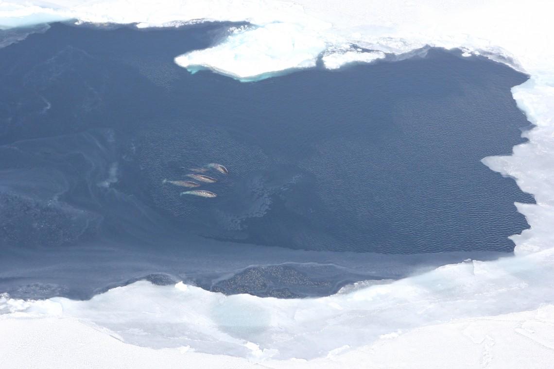 Polar Science Center